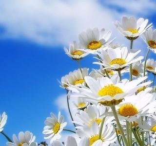 mutluluk bahar